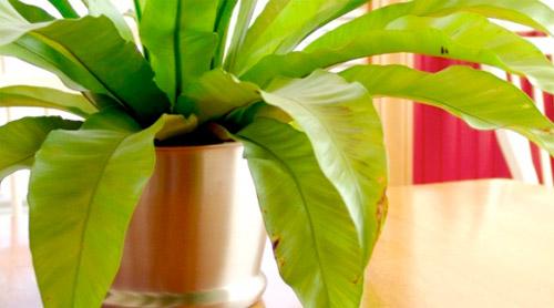 Ambiente arrivano le piante anti smog per - Piante antismog ...